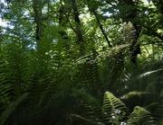 22nd May 2020 - Fern jungle