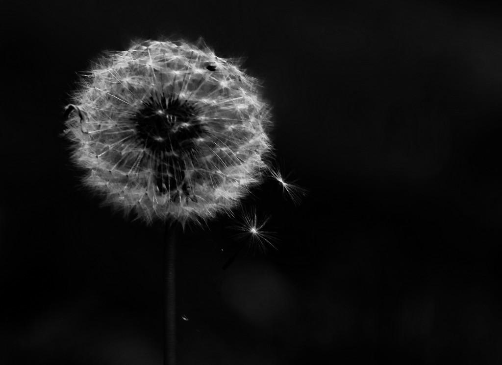 Dream by mzzhope