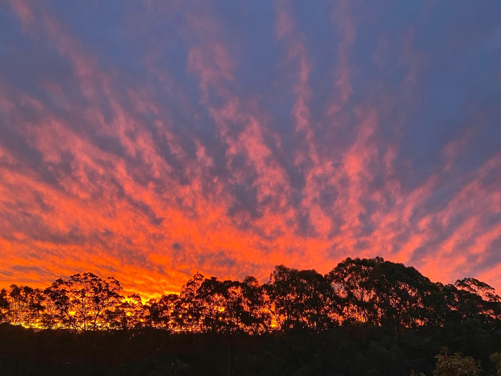 Spectacular sunset by corymbia
