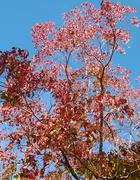 24th May 2020 - Autumn Tree