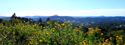 24th May 2020 - Sunshine Coast from The Range today
