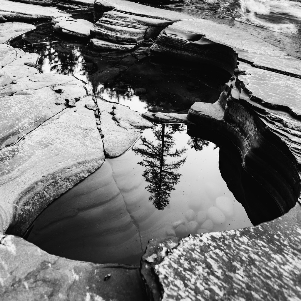 Tree Reflection in the Water Pool by photograndma