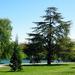 Trees at Green Lake