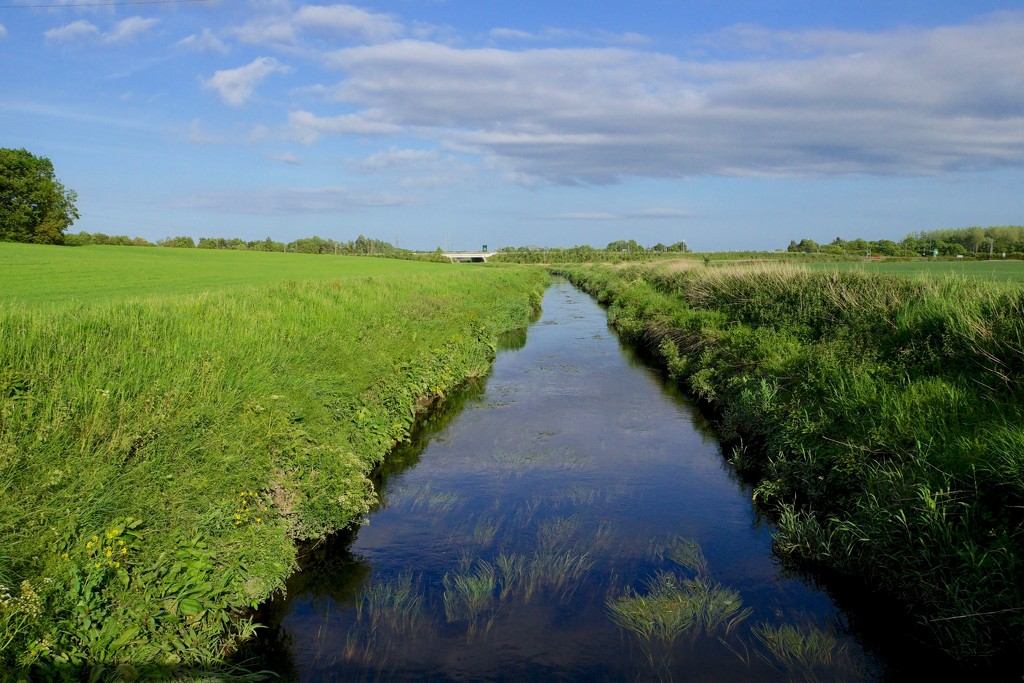 DITTON BROOK  by markp