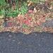 fallen leaves half