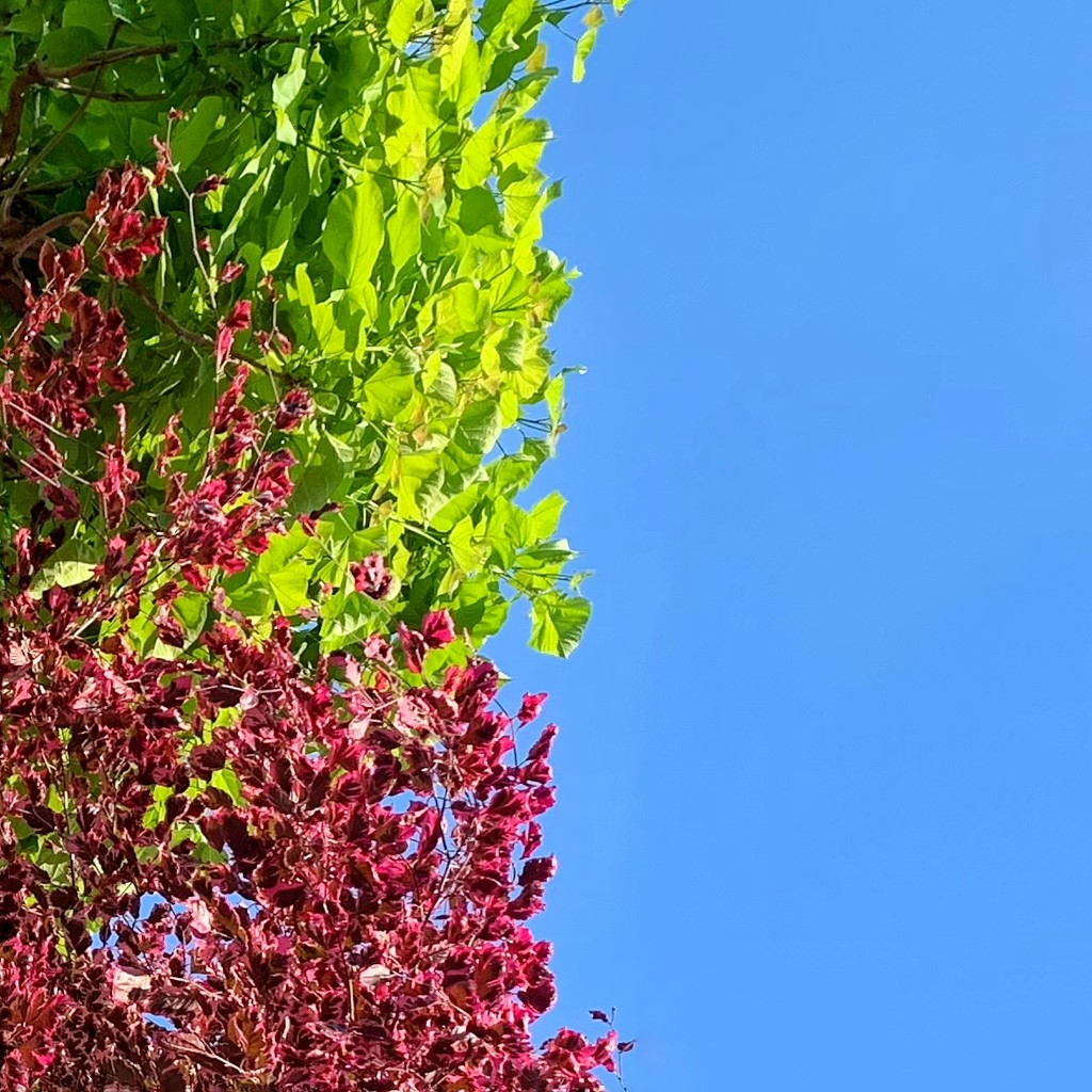Half colorful leaves / half sky.  by cocobella