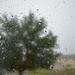It's raining again!