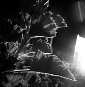 26th May 2020 - Backlit #2