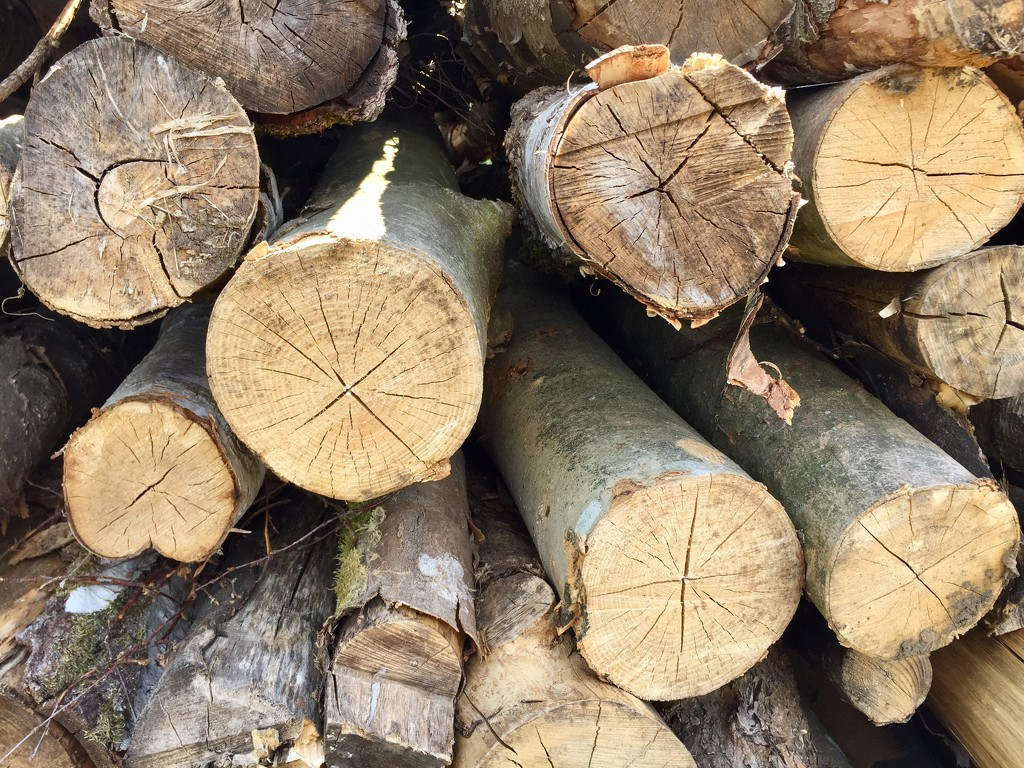 Timber by gillian1912