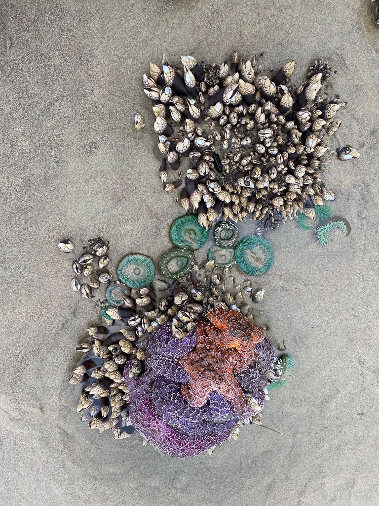 Beach Treasures by jgpittenger
