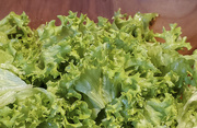 4th Apr 2020 - Lettuce