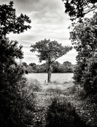 25th May 2020 - The little tree at the end of the lane...