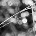 Grasses and Raindrops