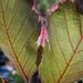 Bleeding leaves?