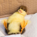Duckling saved by Pete by pamknowler