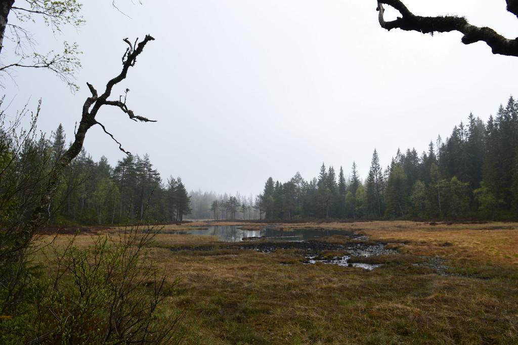 misty marshy moody by didi