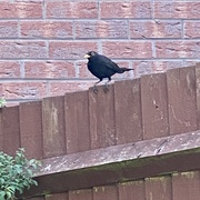 26th May 2020 - Regular visitor