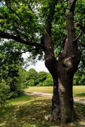 24th May 2020 - Canada Plain, Epping Forest