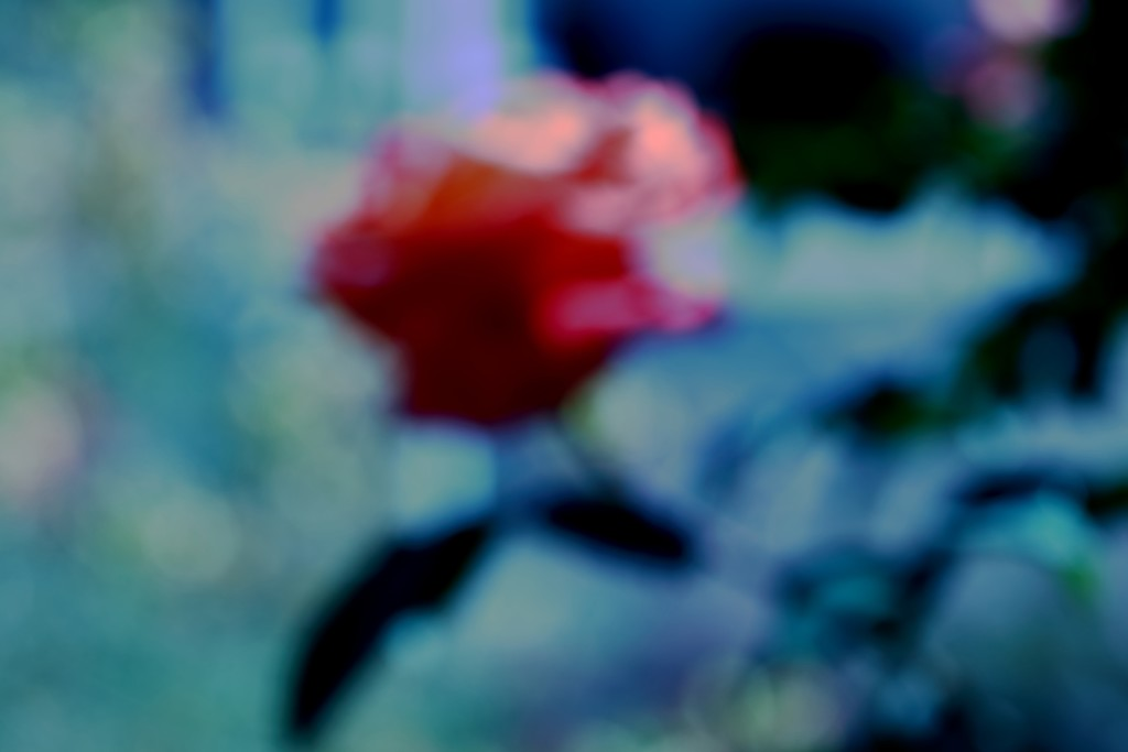 rose blur by blueberry1222