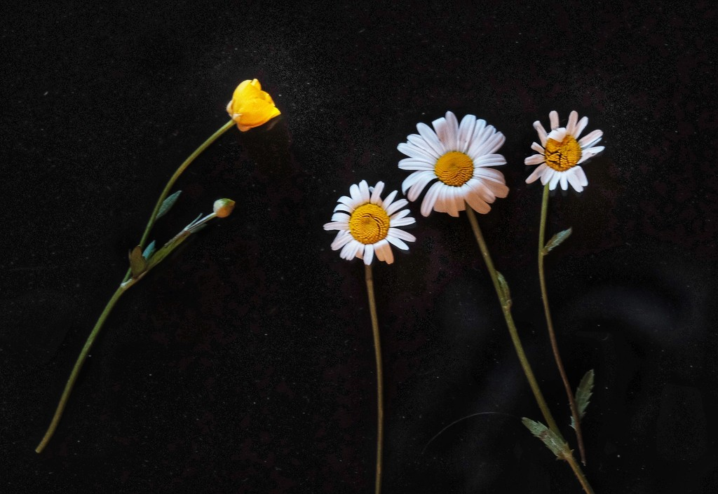 Wild flowers   by caterina