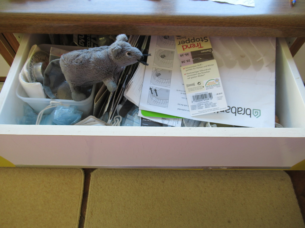 Pauley contemplates the next drawer by anniesue