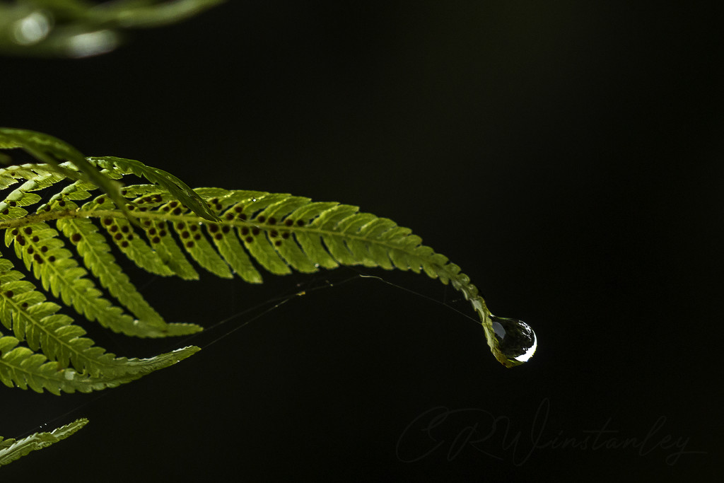 Hanging On by kipper1951