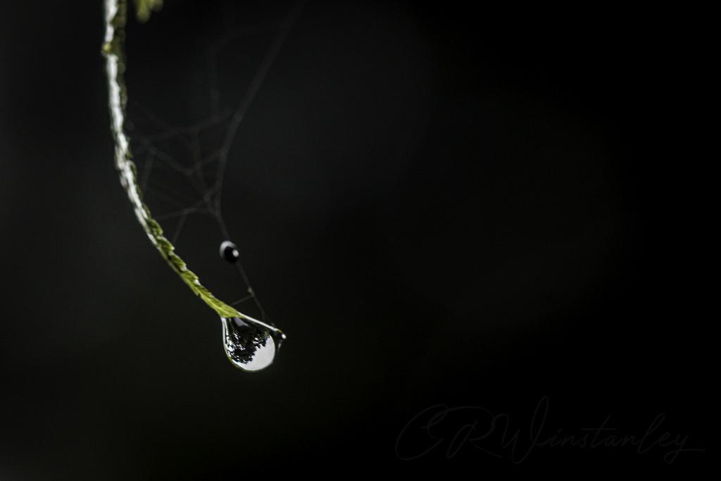 Rain Drop by kipper1951