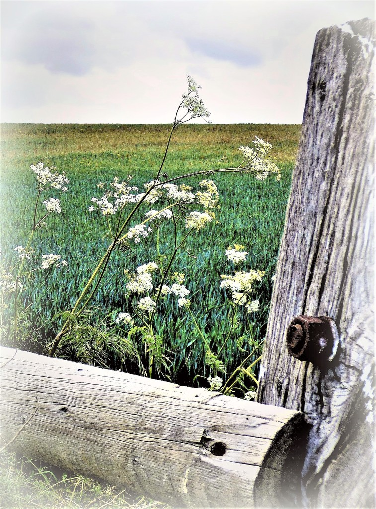 Over the field gate  by beryl