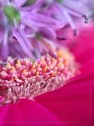 27th May 2020 - Floral fantasy.