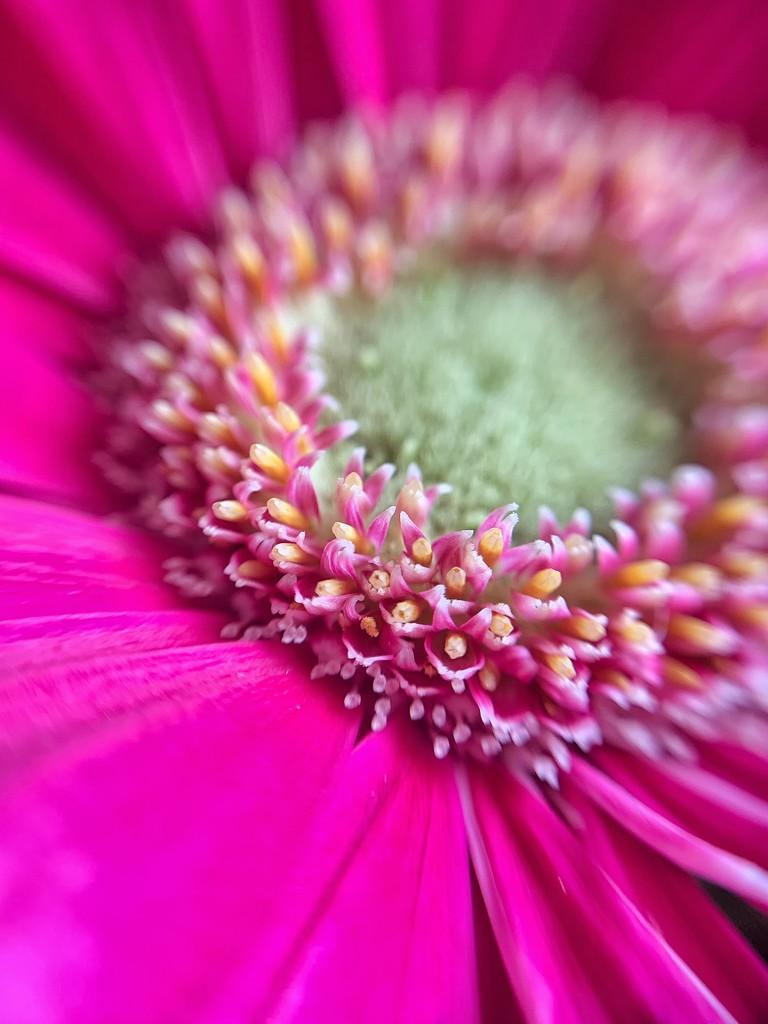 Pink macro. by cocobella