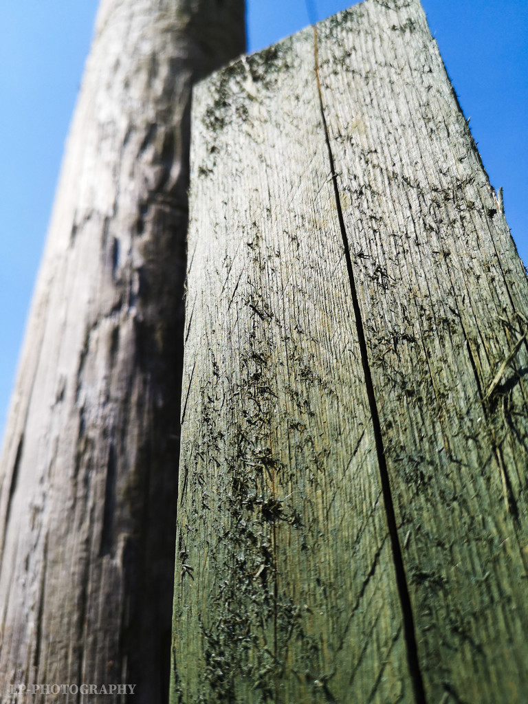 A Fence Post And A Telegraph Pole by tiredpanda