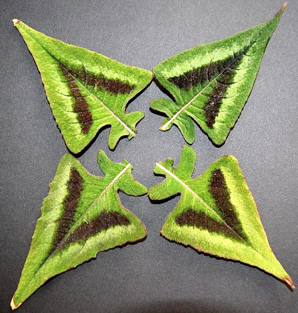 Persicaria Leaves by redandwhite