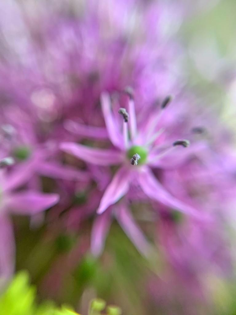 Pollen.  by cocobella