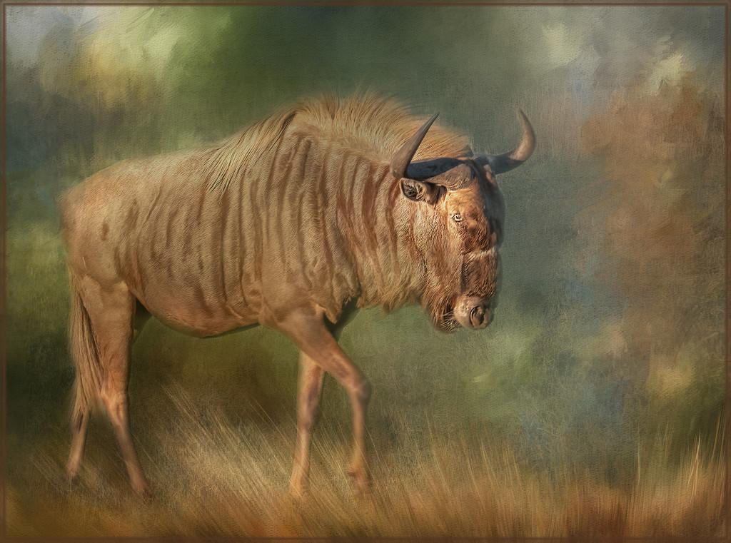 Gnu or Wildebeest by ludwigsdiana