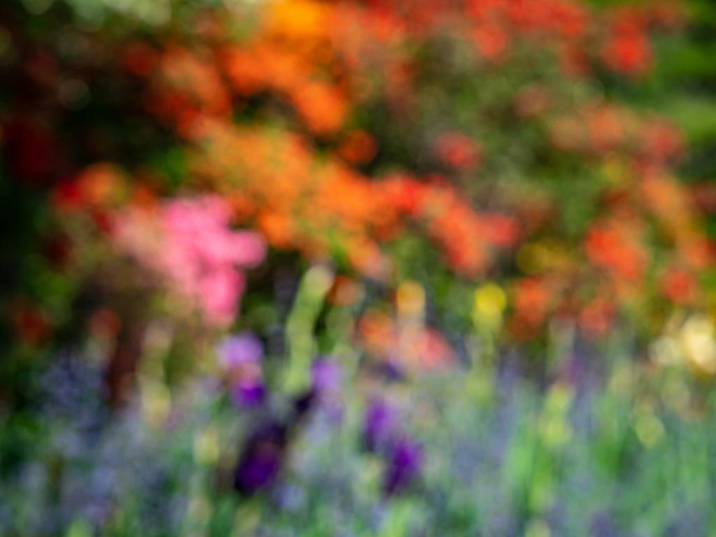 In May in the garden by haskar