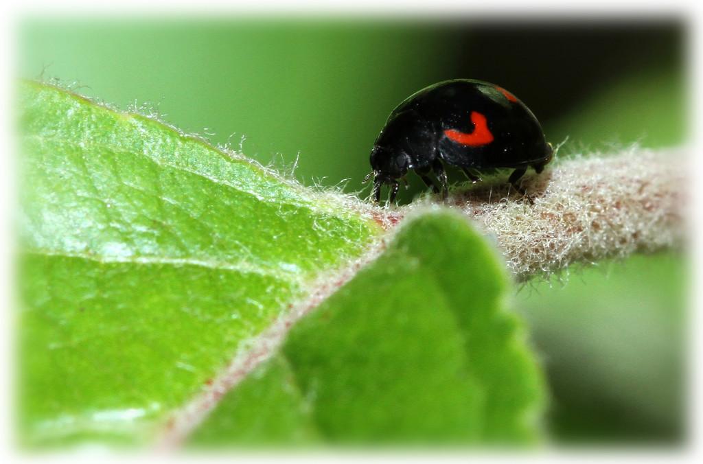 Ladybird by bybri