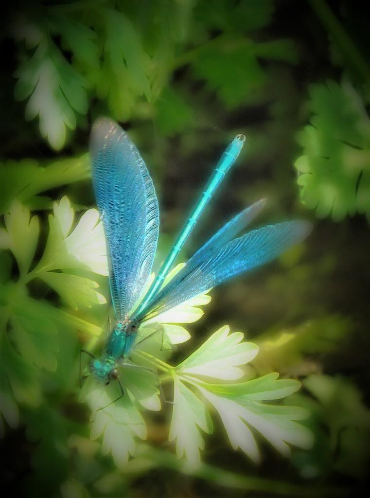 Dragonfly Dreams by ajisaac