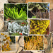 MFPIAC. Collage of plants