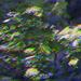 Absract Wind Blown Leaves