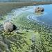 Algae??? by kwind