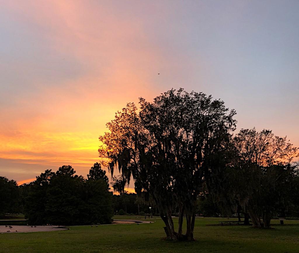 Sunset tonight at Hampton Park by congaree
