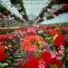 Flowersmile