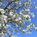 May  29, Spring