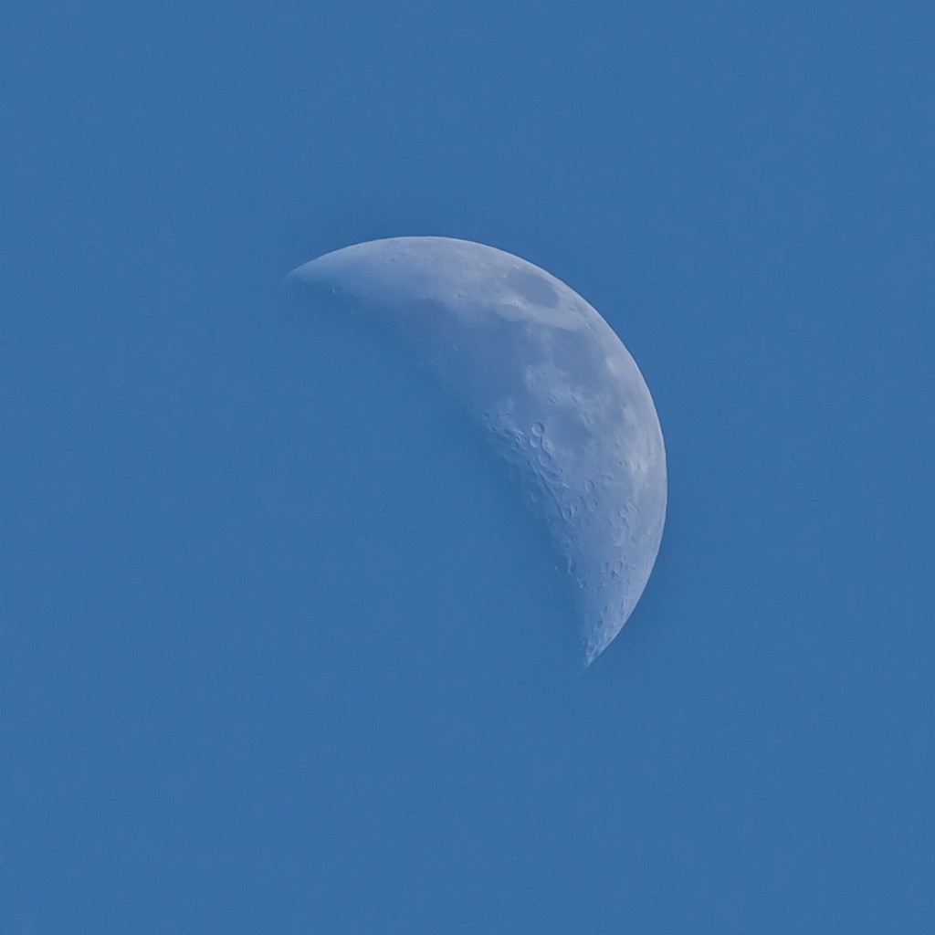 Blue Moon by pamknowler