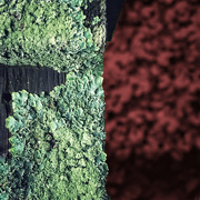29th May 2020 - Luscious Lichen