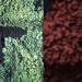 Luscious Lichen