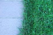 29th May 2020 - Half brick/half grass