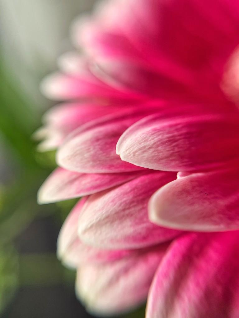 Petals.  by cocobella