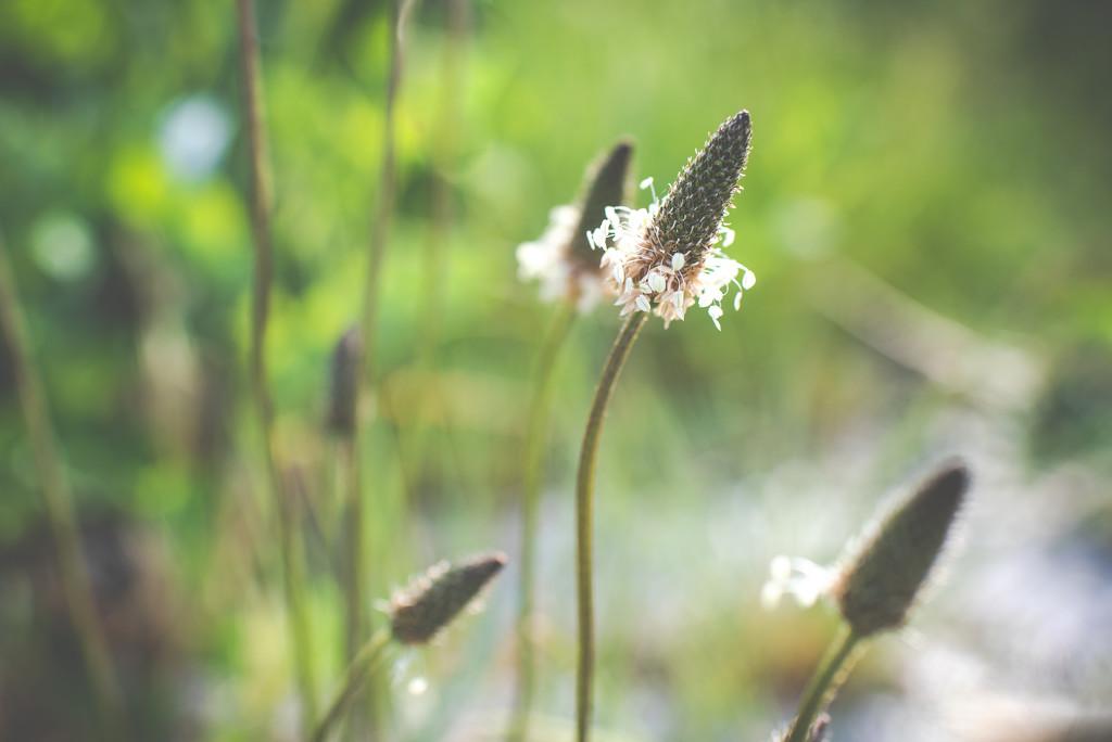 Garden Weed by kwind