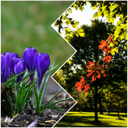 29th May 2020 - the promise of spring, the colours of autumn